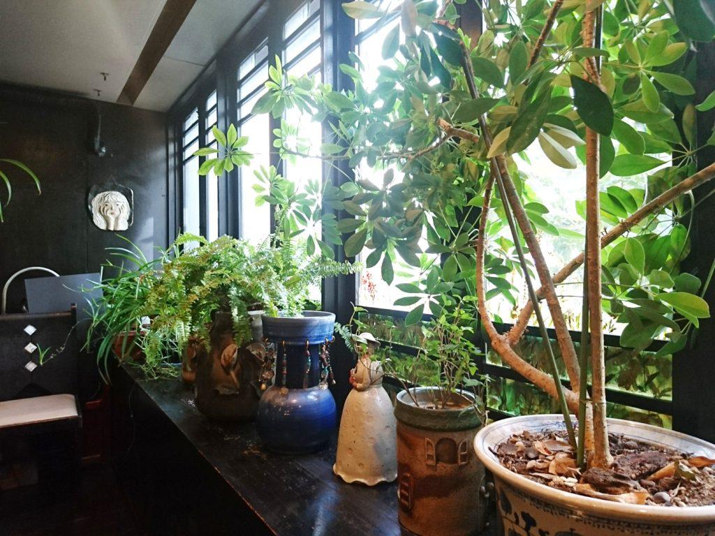 観葉植物と植木鉢